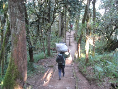 Heading down the trail from Mweka Camp
